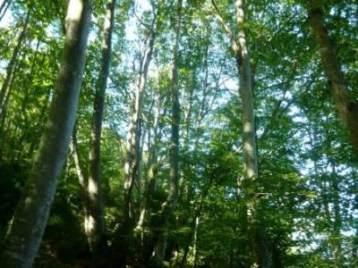 Hayedos Rioja Alavesa- Sierra Cantabria- Toloño;ruta laguna grande gredos el senderista paseos por